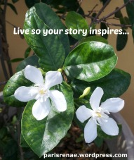 Story Inspires
