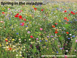 meadow pixa1
