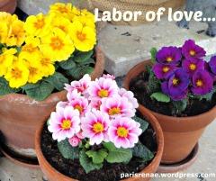 flower potsx
