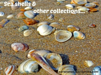 sea shells pixa x