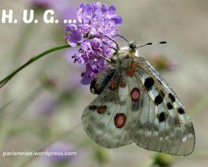 butterfly on flower pixa x
