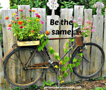 bicycle fence flower pixa x