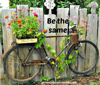 bicycle fence flower pixa x