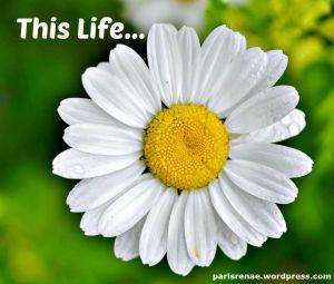 large daisy pixa x
