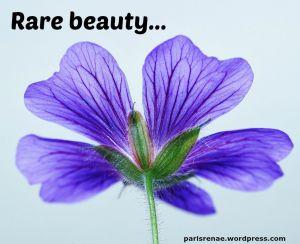 purple flower pixa x