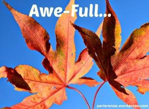 autumn leaves pixa x