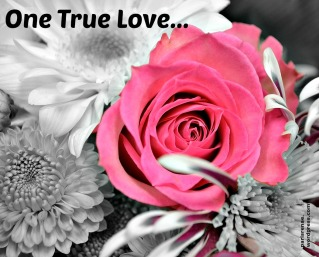 bw pink rose pixa