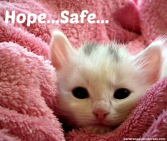 cat in pink blanket pixa