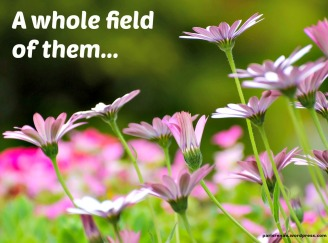 field flowers pixa